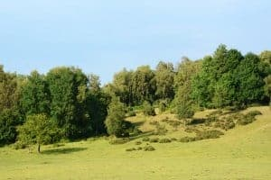New Forest Holiday Park with Away Resorts